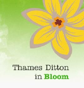 TD in Bloom logo